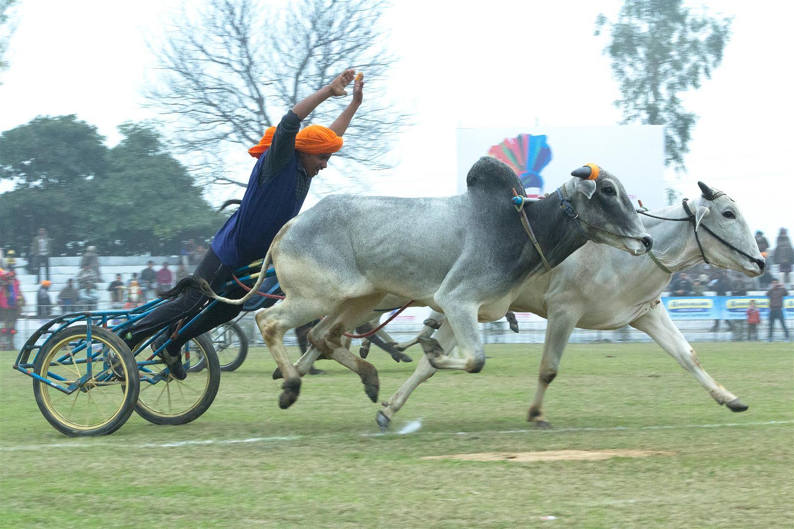Kila Raipur Bullock cart