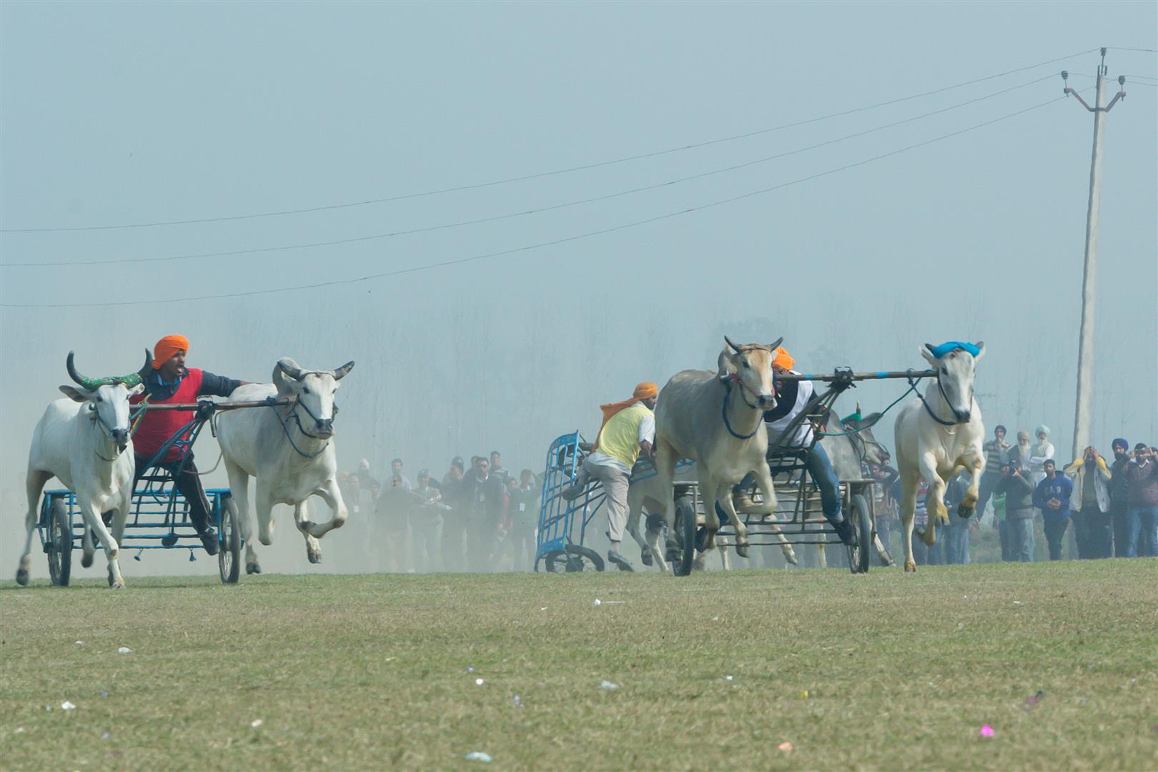 Kila Raipur Bullock Cart races
