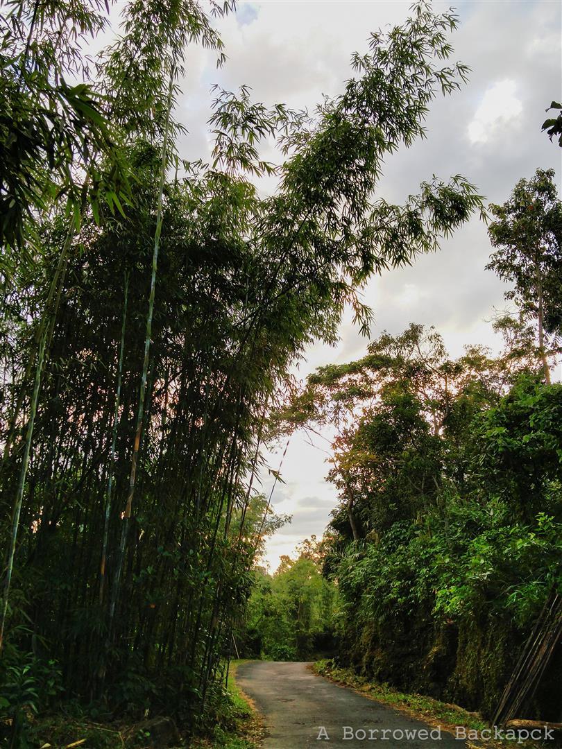 Bamboo (Large)
