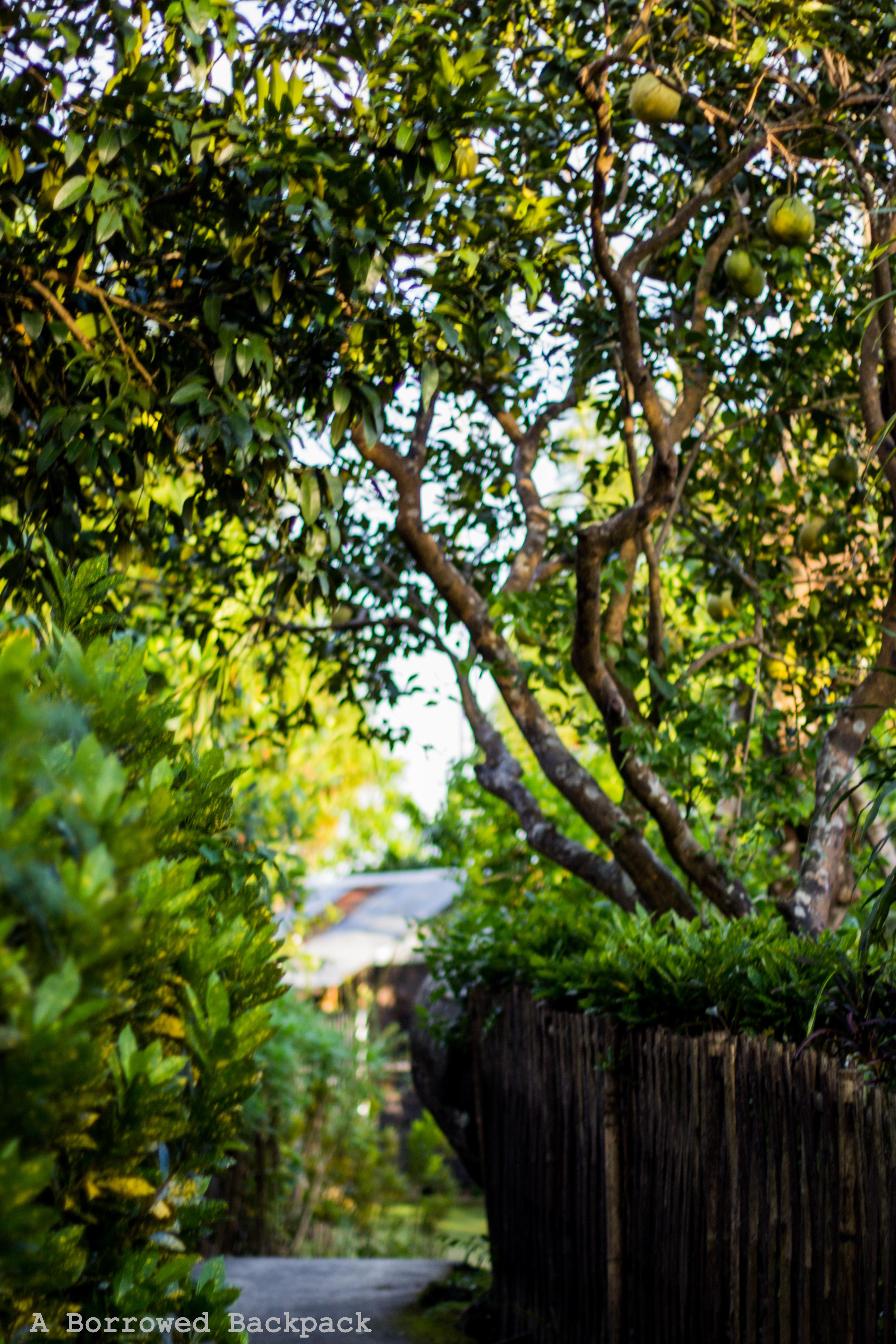 Mawlynnong greenery