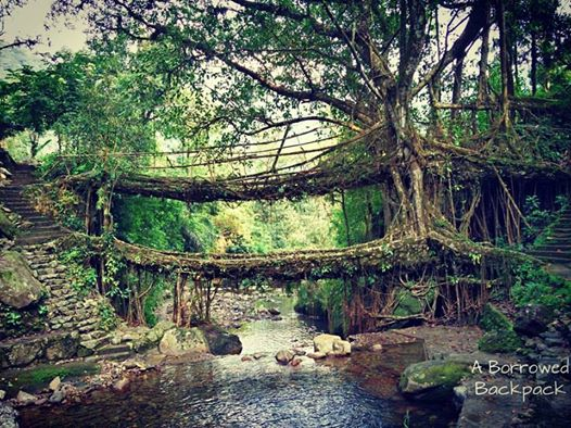 Double decker living root bridge Nongriat