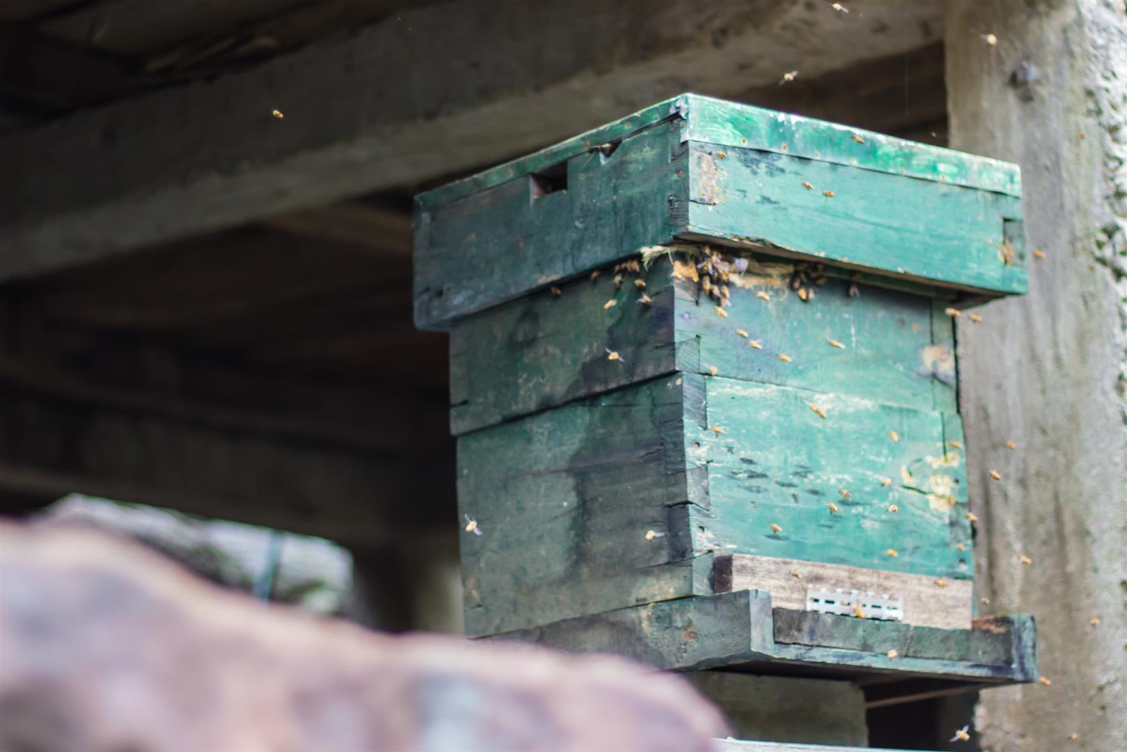 Bee-keeping in Nogriat